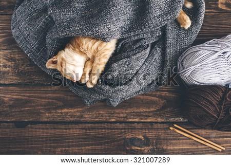 Cute little ginger kitten is sleeping in blanket on wooden background - stock photo
