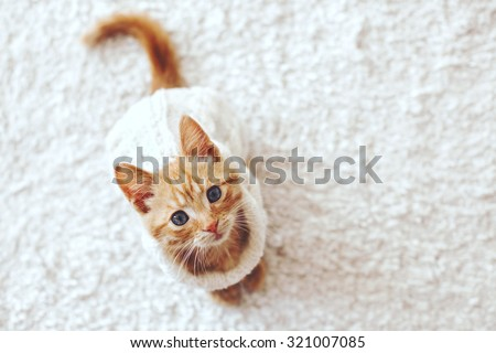 Cute little ginger kitten wearing warm knitted sweater is sitting on white carpet, top view point - stock photo
