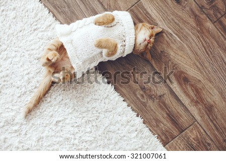 Cute little ginger kitten wearing warm knitted sweater is sleeping on the floor, top view point - stock photo