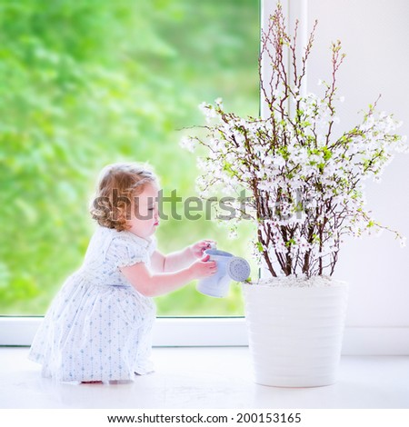 Cute little girl, funny toddler with curly hair wearing a blue festive dress, watering flowers - cherry blossom tree at home in a white sunny living room with a big garden view window - stock photo