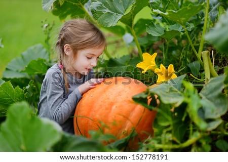 Cute little girl hugging a pumpkin in a pumpkin patch