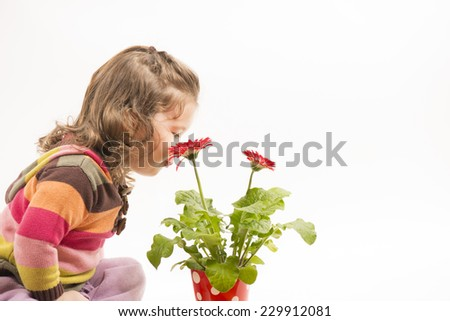 Cute little girl playing with flowers, blowing and smelling them, studio shot, white background - stock photo