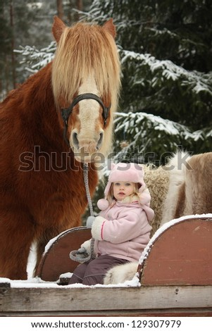 Cute little girl sitting in the sledges and big palomino draught horse standing near - stock photo