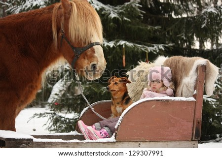 Cute little girl sitting in the sledges with dog and big palomino draught horse standing near - stock photo