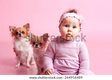 Cute little girl with chihuahuas in room over pink. Childhood.  - stock photo