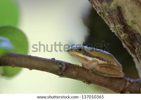 Cute little green tree frog - stock photo