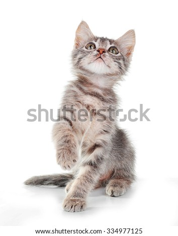 Cute little grey kitten, isolated on white - stock photo