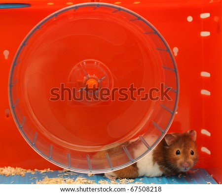cute little hamster in its blue and orange house