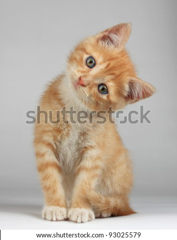 Cute little kitten - stock photo