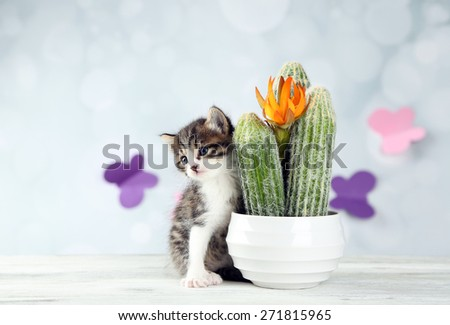 Cute little kitten and cactus on light background - stock photo