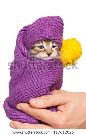 Cute little kitten in a scarf on woman hands isolated on white background - stock photo