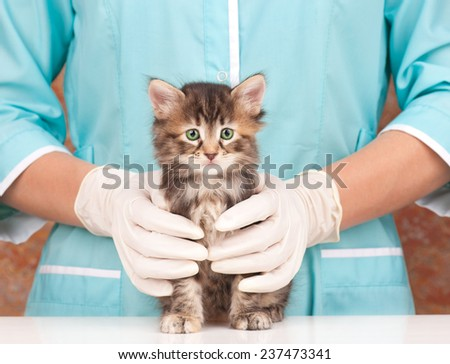 Cute little kitten in hands at the veterinarian over white background - stock photo
