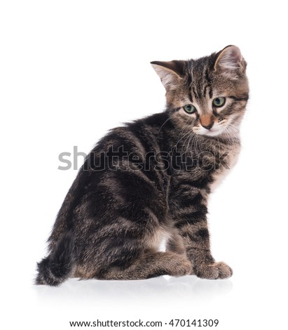 Cute little kitten isolated on a white background