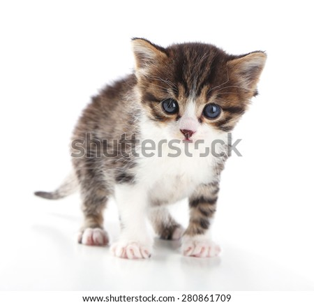 Cute little kitten, isolated on white - stock photo