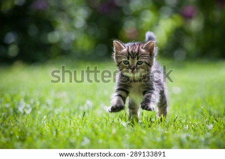 Cute little kitten jumping on green grass