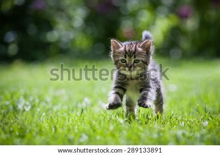 Cute little kitten jumping on green grass  - stock photo