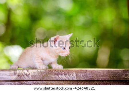 Cute little kitten. kitten walking in park - stock photo