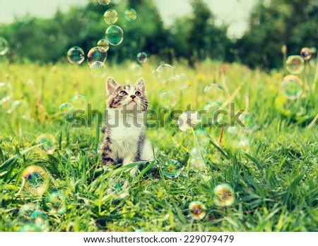 Cute little kitten looking at soap bubbles on summer meadow. Image with sunlight effect. - stock photo