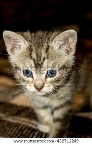 Cute little kitten of grey color with black stripes and spots.