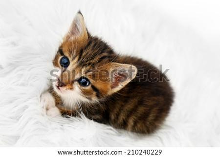 Cute little kitten on fur rug - stock photo