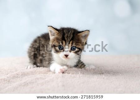 Cute little kitten on light background - stock photo