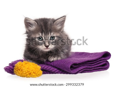 Cute little kitten on the knitted scarf isolated on white background - stock photo