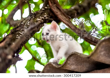 Cute little kitten on the tree in garden. Cat climbing the tree - stock photo