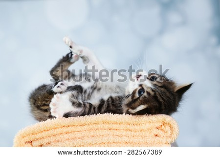 Cute little kitten on towel, on light background - stock photo