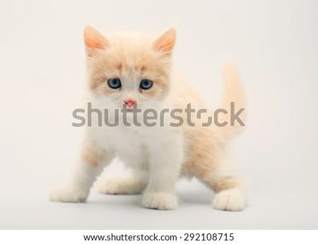 Cute little kitten on white - stock photo