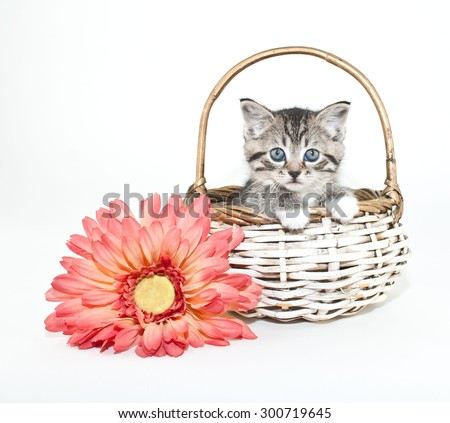 Cute little kitten peeking out of a basket with a pink daisy beside her, with copy space.