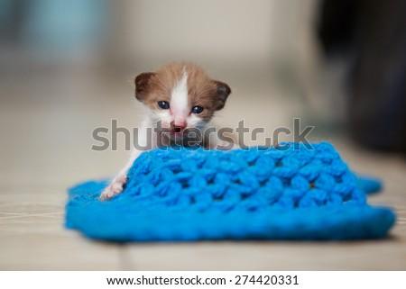 Cute little kitten playing of yarn on the tiles. - stock photo