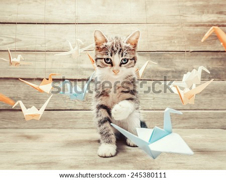 Cute little kitten playing with colorful paper origami birds cranes and looking at camera on wooden background - stock photo