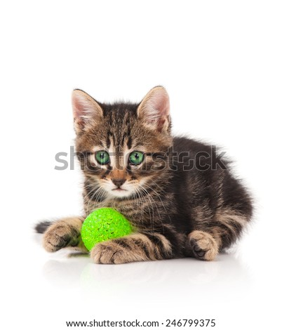 Cute little kitten plays with ball of green threads on white background - stock photo