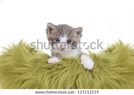 Cute Little Kitten Portrait in Studio on White Background - stock photo