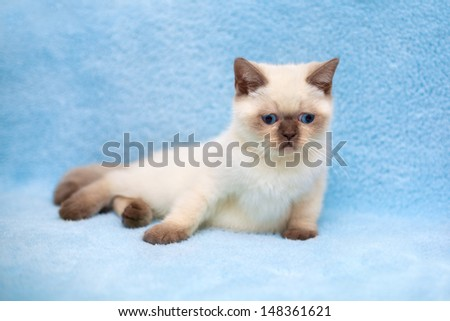 Cute little kitten relaxing on a blue blanket - stock photo