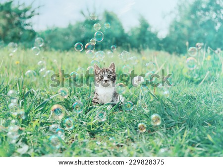 Cute little kitten sitting among soap bubbles on summer meadow. Image with vintage instagram filter - stock photo
