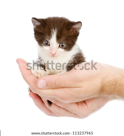 cute little kitten sitting on the palm of a man. isolated on white background - stock photo