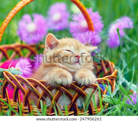 Cute little kitten sleeping in a basket on the floral lawn - stock photo