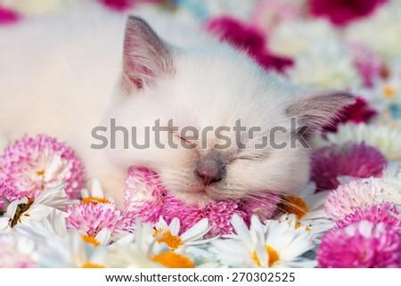 Cute little kitten sleeping on flowers - stock photo
