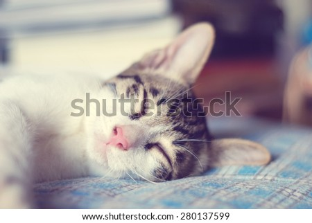 Cute little kitten sleeps on blue tartan blanket  - stock photo