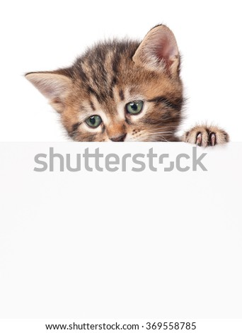 Cute little kitten with blank billboard on white background - stock photo