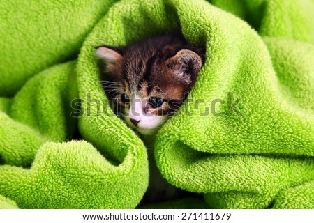 Cute little kitten with towel, close up - stock photo