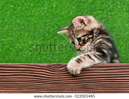 Cute little kitten with wooden plank on green background  - stock photo