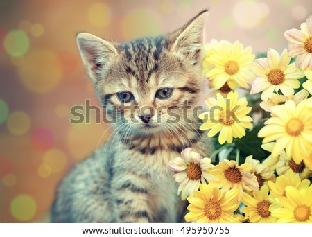 Cute little kitten with yellow daisy flowers