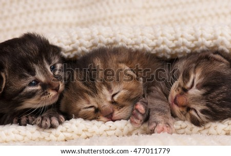 Cute little kittens in the warm knitted sweater over white background