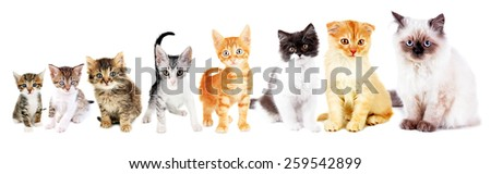 Cute little kittens isolated on white - stock photo