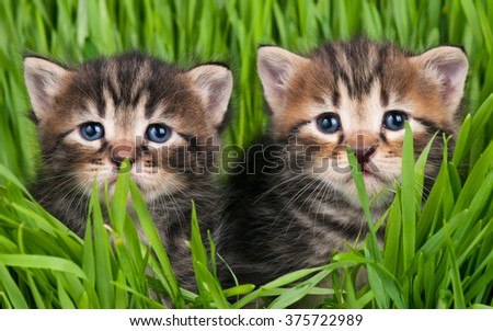 Cute little kittens over bright green grass background - stock photo