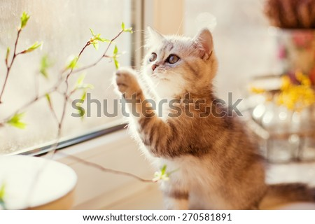cute little kitty playing with green leaves - stock photo