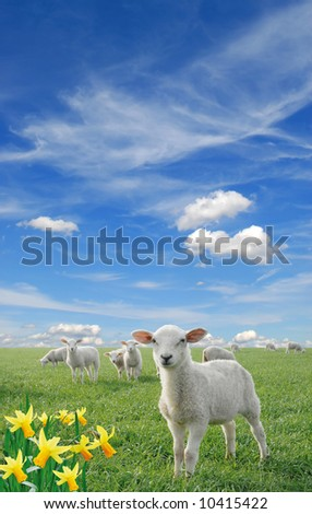 cute little lambs on fresh green meadow with yellow flowers - stock photo
