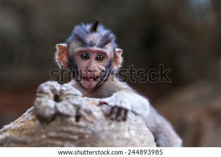 Cute little monkey hanging on the sculptured rock